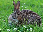 rabbit-nose_newsblog