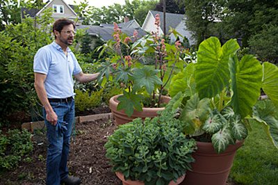 david Calle with potted succulents