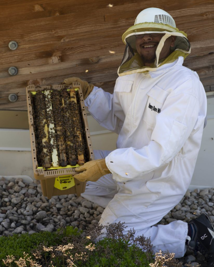 Israel Del Toro, dressed in a protective suit, preps honeybees for the observational hive on the roof of the Warch Campus Center.