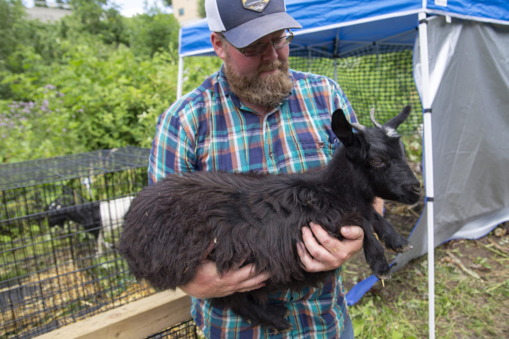 Steve Anderson, operator of Goat Busters, holds one of the goats in the SLUG garden.