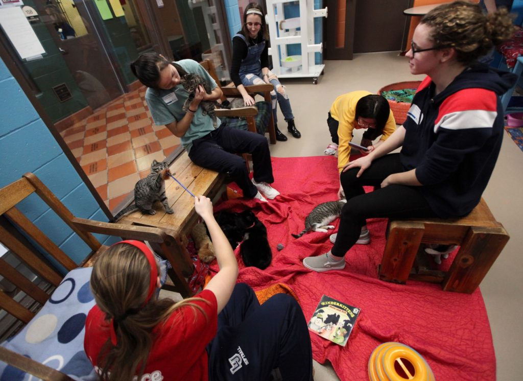 Lawrence students sit with cats at the Fox Valley Humane Association during the MLK Day of Service on Monday.